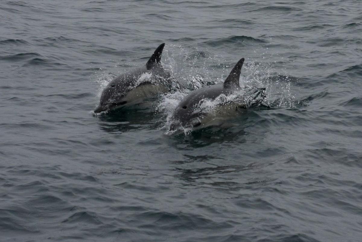 c dolphin 3