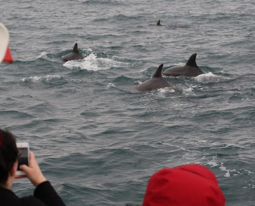 dolphin 5.17